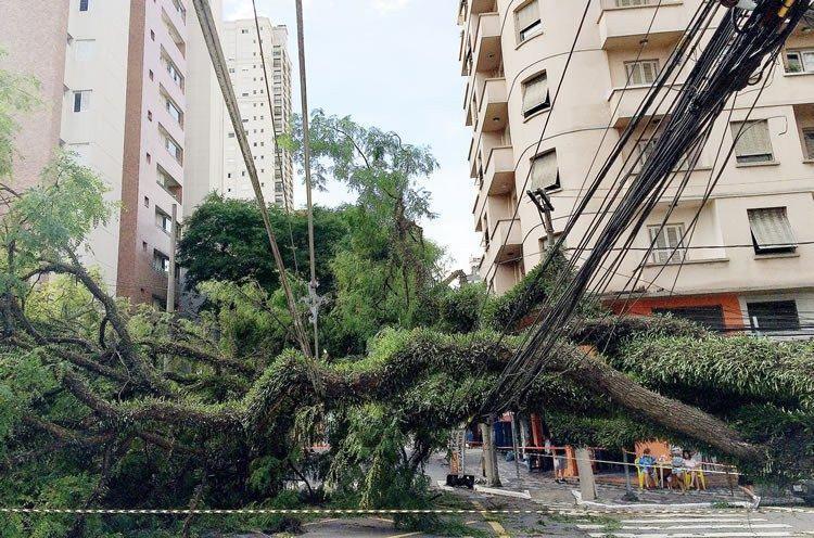 Subiu para 198 o número de árvores derrubadas em razão do forte temporal que atingiu a capital paulista na madrugada de hoje (29). (Foto: Robson Fernandjes / Fotos Públicas