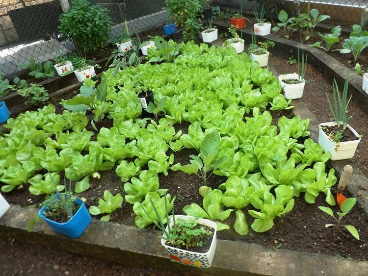 A horta tem 24m² e produz diversos alimentos. Entre eles, a berinjela, muito aproveitada nesta época do ano. (Foto: Divulgação/PMI)