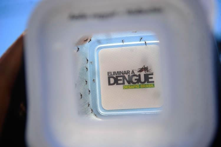 Combater a dengue é um dever de todos. (Fernando Frazão/ Agência Brasil)