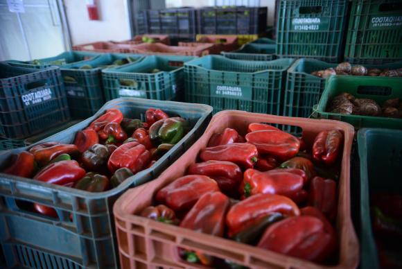 Segundo o presidente da Associação de Supermercados do Estado, Aylton Fornari, o primeiro efeito será o desabastecimento de frutas, legumes, verduras e ovos – os chamados hortigranjeiros. (Foto: Antonio Cruz/Agência Brasil)
