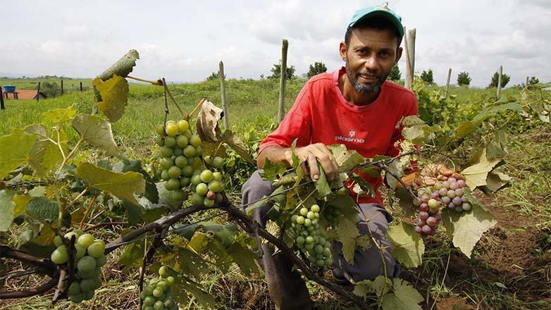 Também estão no hotsite as notícias mais recentes divulgadas pela Prefeitura de interesse do setor rural. (Foto: Antonio Basilio/PMSJC)