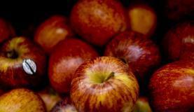 Praga Cydia pomonella foi identificada em maçãs, peras  e  marmelos  da  Argentina. (Foto:     Arquivo/ABr)