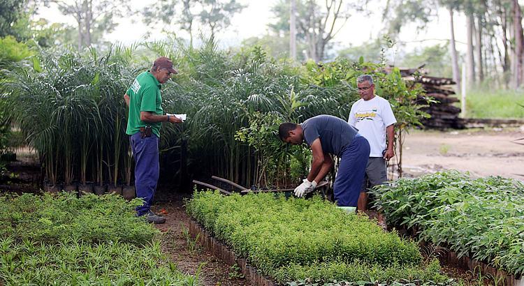 Prefeitura de Pinda realiza doação de mudas de árvores