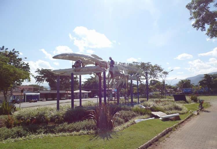 Esqueleto de baleia Jubarte é restaurado em Ubatuba